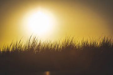 Duingras bij zonsondergang langs de Texelse kustlijn