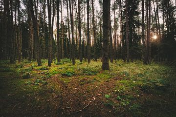 Forêt noire sur Skyze Photography by André Stein