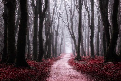 Rote Träumerei von Tvurk Photography