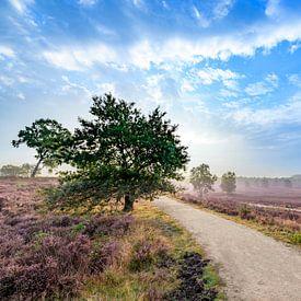 Blühende Heidepflanzen in Heide-Landschaft bei Sonnenaufgang im Sommer von Sjoerd van der Wal