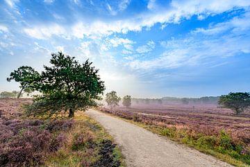 Plantes de bruyère en fleurs dans le paysage des landes au lever du soleil en été sur