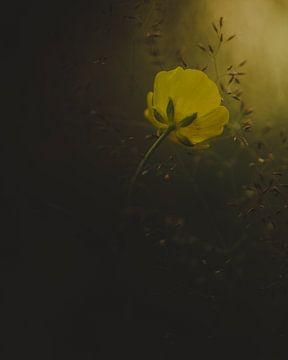 Op zoek naar het licht van Vladimir Fotografie