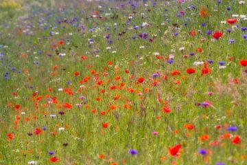 Monets summer breeze - veldbloemen (klaprozen) van Brigitte van Krimpen