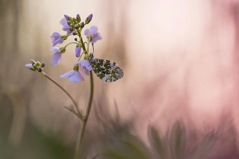 Terwijl de vlinders nog slapen van Marc Crutzen