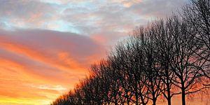 Silhouette einer Reihe von Pappeln am Winterabend vor einem farbenfrohen, warmen Sonnenuntergang in  von Annavee