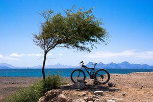 Mountainbike im Schatten eines Baumes