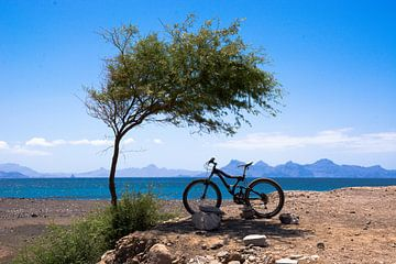 Mountainbike in de schaduw van een boom van Adri Vollenhouw