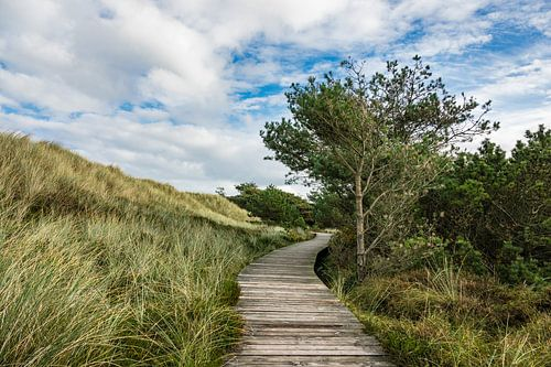 Landscape with dunes on the island Amrum
