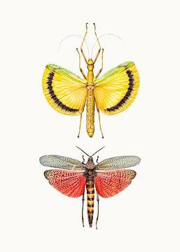 Rariteitenkabinet_Insecten_08 van