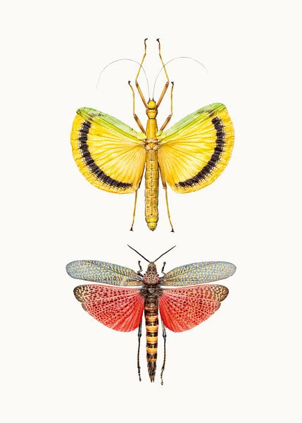 Rariteitenkabinet_Insecten_08 van Marielle Leenders