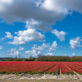 Rode tulpenbedden Callantsoog van Margreet Frowijn