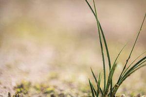 Gras van Miranda van Hulst