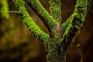 Kunst door moeder natuur