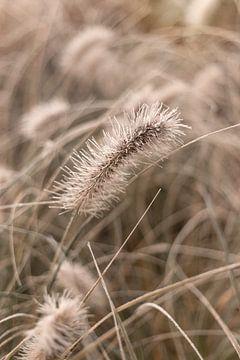 Prachtige grassen in de tuin met vleugje rijp van Sandra Koppenhöfer