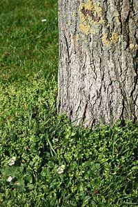 Springtime Tree And Meadow
