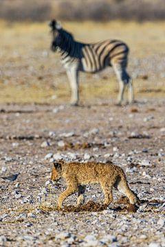 Baby Löwe van