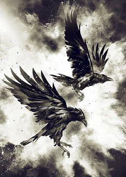 Ravens van Mateo