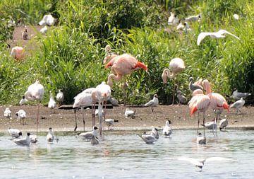flamingo's met jongen van Petra De Jonge