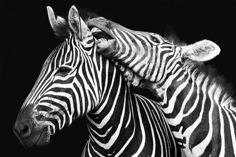 Kampf gegen Zebras in Schwarz-Weiß von De Afrika Specialist
