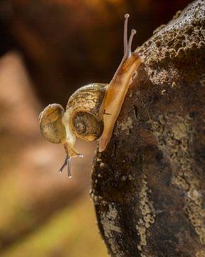 snail trail van Geertrui Desmet