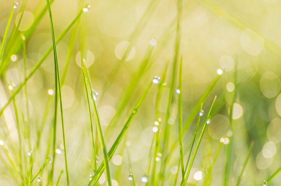 Lente frisheid - dauw in het gras van Judith Spanbroek-van den Broek