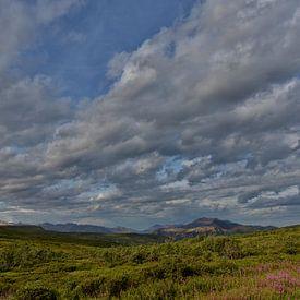 Alaska, Denali National Park. van Tilly Meijer