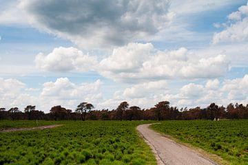 The Hoge Veluwe National Park, the Netherlands von Tamara Witjes