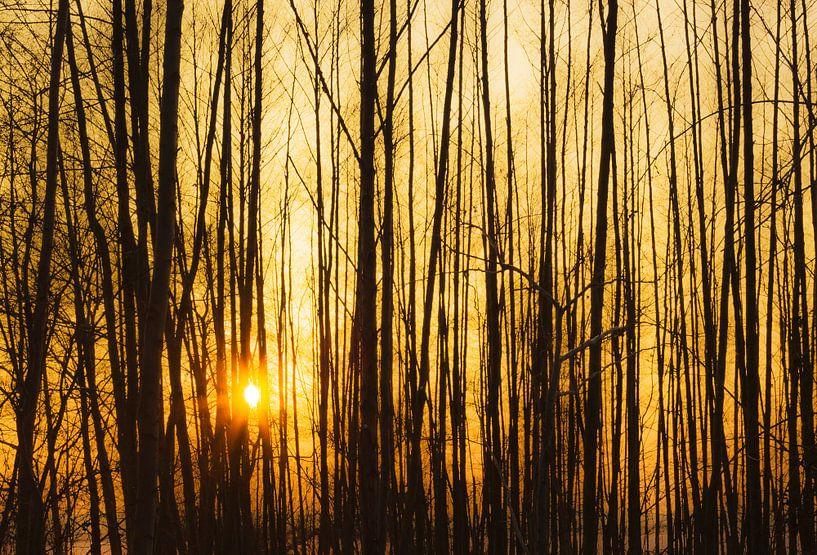 Coucher de soleil derrière les arbres sur Frank Herrmann
