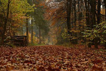 Boswandeling in de herfst. van Wil van der Velde