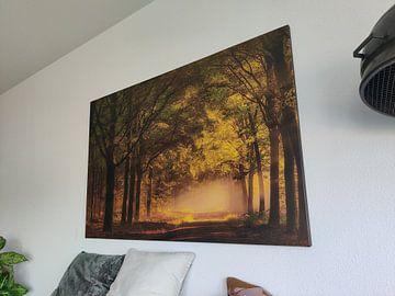Kundenfoto: Zonsopkomst in het bos.  von Piet Haaksma