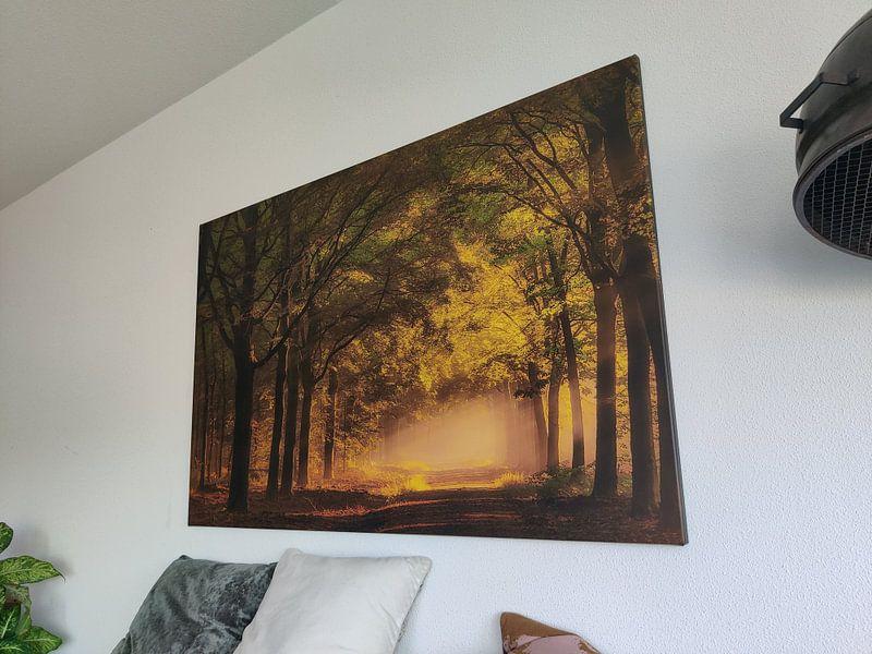 Photo de nos clients:  Sunrise in the forest. sur Piet Haaksma, sur toile