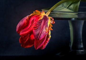 Tulipe rouge. sur natascha verbij