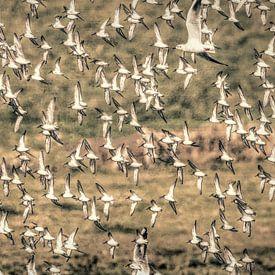 birds birds birds van eric van der eijk