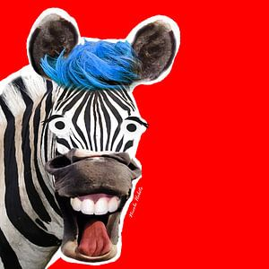 Te gekke Zeebra met rode achtergrond van