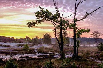Sonnenaufgang in Brunsummerheide von Anita Martin, AnnaPileaFotografie