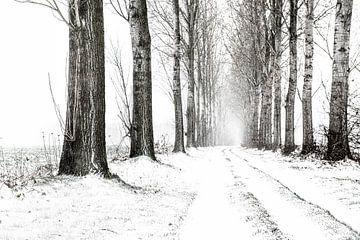 Winterlandschap, besneeuwde landweg met bomenrijen in zwart-wit. van Ron van der Stappen