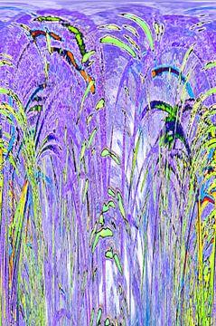 Kleurrijk riet (drieluik) van CreaBrig Fotografie