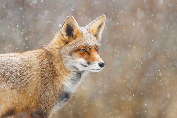 Sneeuw :-) van Pim Leijen