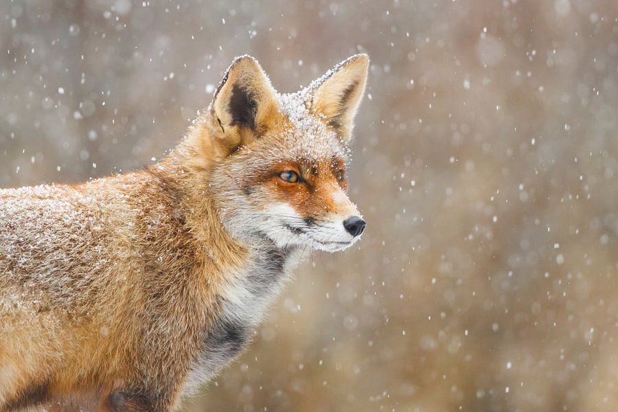 Sneeuw :-)