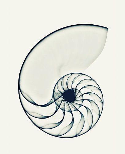 X-ray Nautilus van Cor Ritmeester