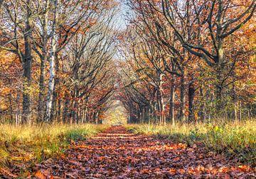 Herfstkleuren van RJH van de Kimmenade