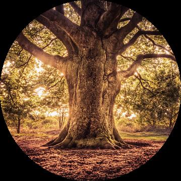 Tree of Life, Levensboom van Michiel Buijse