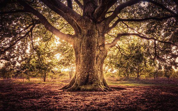 Tree of Life, Levensboom