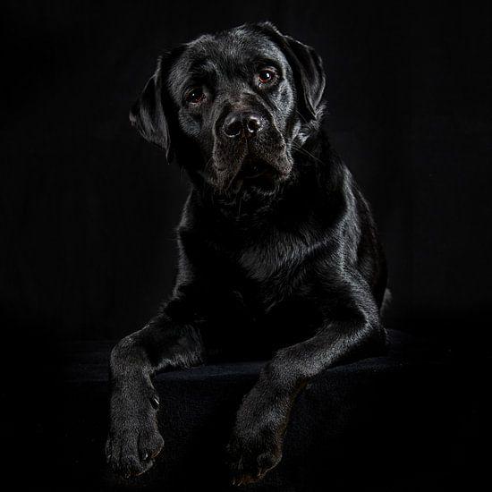 Labrador van Anouschka Hendriks