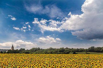 Een veld vol zonnebloemen voor een kerkje in Frankrijk