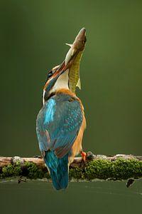 IJsvogel met snoekje. van Gerrit van de Velde
