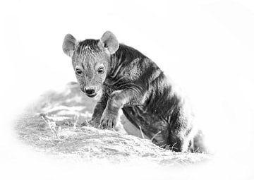 Junge Hyäne von Robert Styppa