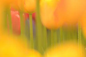 Tulpenstengels van