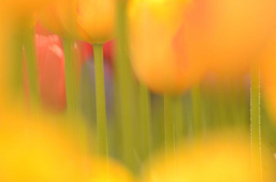 Tulpenstengels van Hein de Vries