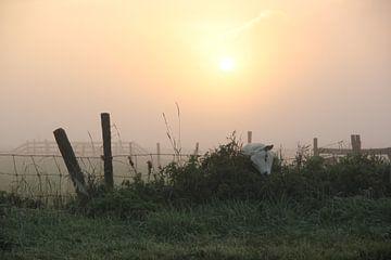 Texel Landschap 052 von Starworks Lien van der Star